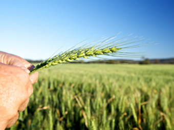 Outsourcing Agricultural Services